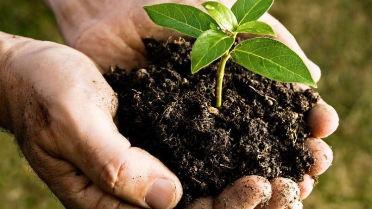 Proposta que define critérios para uso do lodo de esgoto em solos é aprovada pelo Conselho Nacional de Meio Ambiente